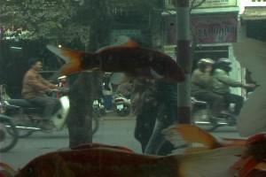 HIPS-fish